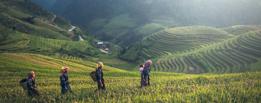 Agriculture au Cambodge