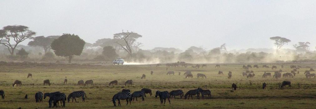 Le safari au Kenya